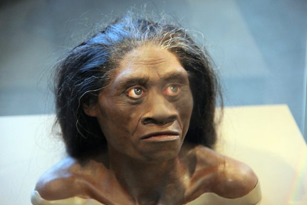 Foto:  Homo floresiensis adult female - model of head - Smithsonian Museum of Natural History - 2012-05-17, Tim Evanson, CC BY-SA 2.0
