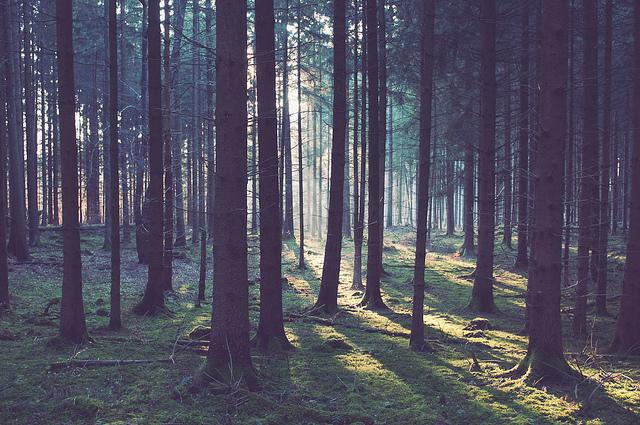 Saubere Luft: China pflanzt 84.000 Quadratkilometer Wald