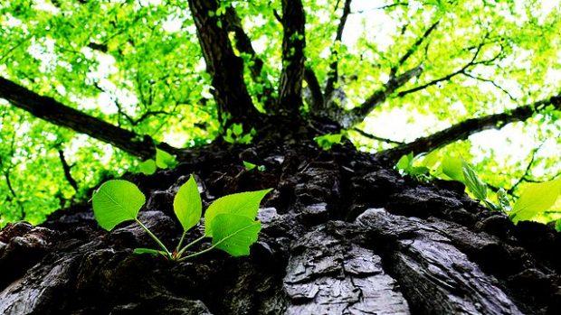 Unterschätzte Gefahr: 40 Prozent der US-Wälder sind durch invasive Schädlinge bedroht